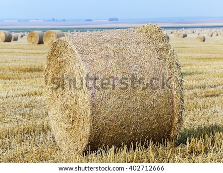 an agricultural field on which there are haystacks straw after harvesting wheat - stock photo