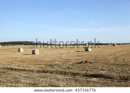an agricultural field, which remained Straw Haystacks after wheat harvest - stock photo