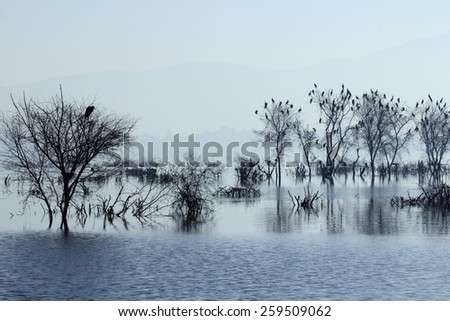Ana Sagar lake in Ajmer with silhouettes of trees and birds. A foggy morning scene. - stock photo