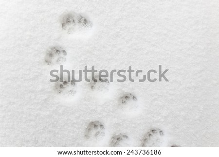 ��¡at footprints in the snow - stock photo