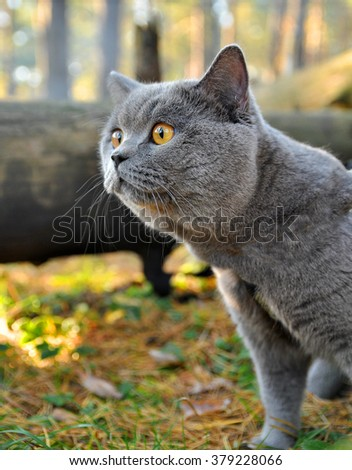 ?at named Mortimer saw the horse for the first time. British cat named sir Merlin Mortimer Gray saw a horse for the first time in his life.