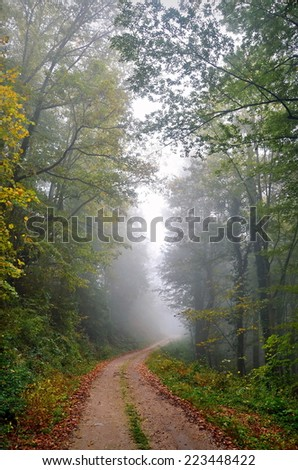 Autumn and the path through the woods - stock photo