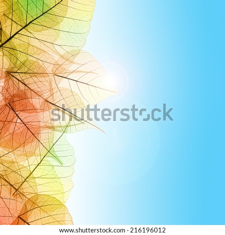 Autumn composition with transparent Leaves and blue sky background - stock photo