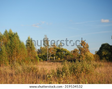 Autumn landscape. View of the autumn wood
