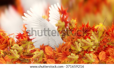 Autumn Leaves and dove wings  conceptual background - stock photo