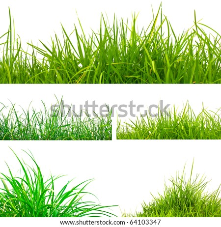 3 backgrounds of fresh spring green grass and 2 tufts of grass  Isolated On White