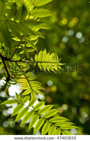 Backlit green fresh leaves with narrow depth of field
