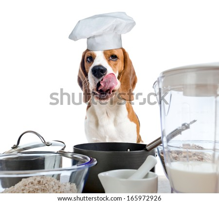 beagle in cook hat behind a kitchen table, focus on tongue ,  isolated on  white - stock photo