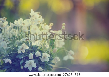 beautiful anemone bouquet  at the garden  - stock photo