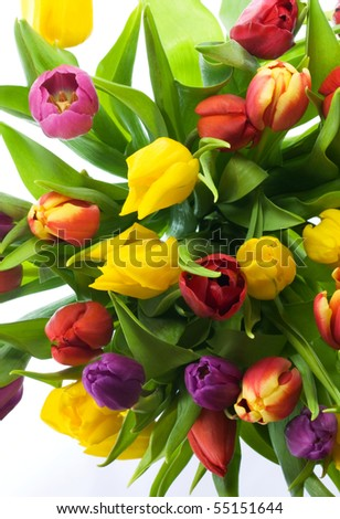 Beautiful brightly colored tulips,full frame background