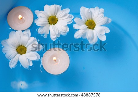 Beautiful Daisies - stock photo