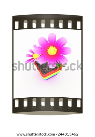 beautiful flower in the colorful pot. The film strip - stock photo