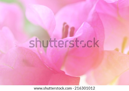 beautiful flowers made with color filters background