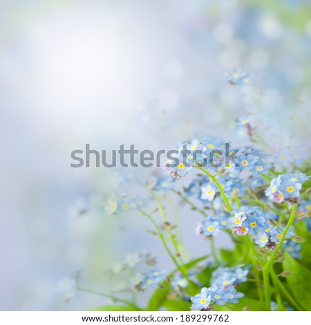 Beautiful forget me not blossoms background. - stock photo