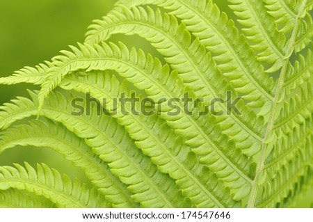 beautiful green leafs of fern on  background  - stock photo