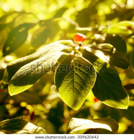 beautiful leves in sunlight                    - stock photo