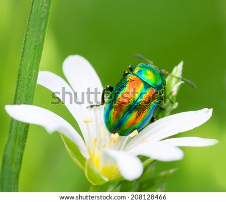beautiful macro the colored bug sits on a   white flower - stock photo