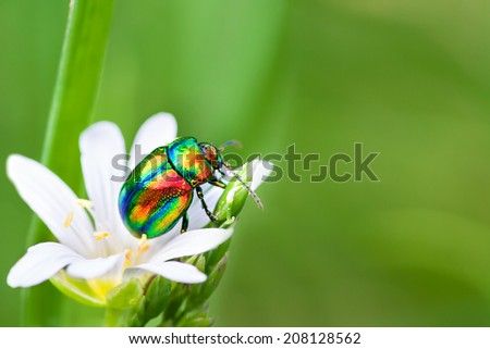 beautiful macro the multi  colored bug sits on a  white flower - stock photo