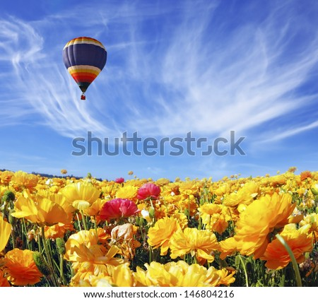 Beautiful spring weather, beautiful big balloon flies over the field. The huge field of white, red and orange buttercups (Ranunculus asiaticus). The picture was taken Fisheye lens - stock photo
