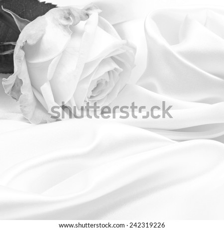 Beautiful white roses in black and white on white silk as wedding background - stock photo