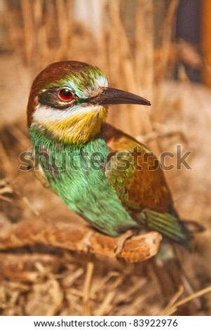 bee-eater - stock photo