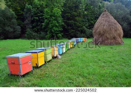 bee hive - stock photo