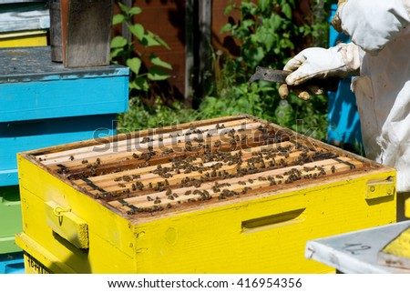 Beekeeper working on his beehives in the garden - copy space - stock photo