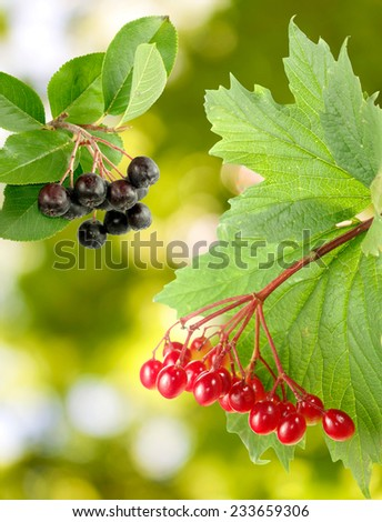 berries in the garden on a green background - stock photo