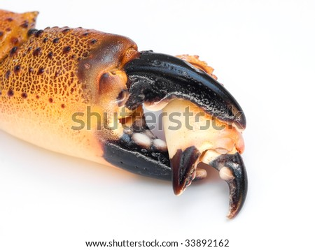"""""""Big cancer eats small cancer"""".Conceptual image on a white background. - stock photo"""