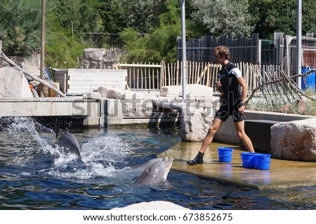 8.7.2017 big dolphin show in the German city of Nuremberg. The zoo where the trainer feeds dolphins, and the dolphins at once show the creeps. Great audience participation.