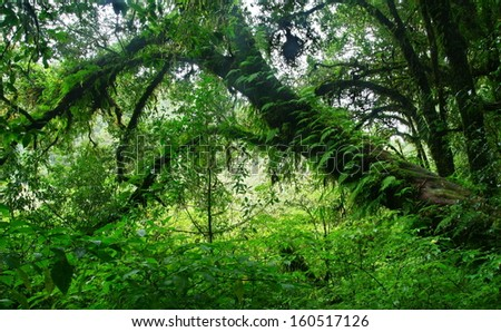 big tree with fern in deep forest, Chiang Mai,Thailand - stock photo