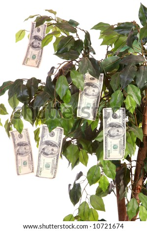 $100 bills growing on a money tree with a white background. Vertical image. - stock photo