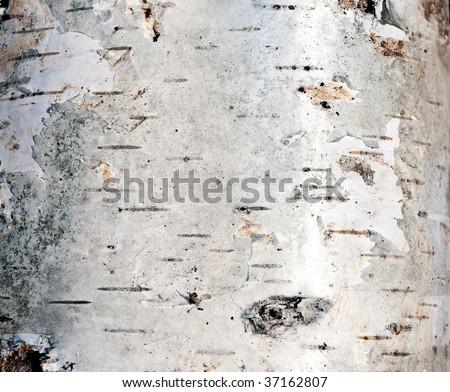 Birch bark - texture - stock photo