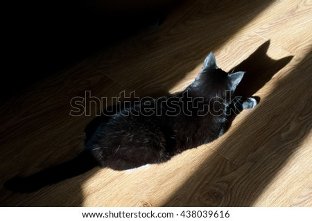 black cat and its reflection on the floor early in the morning in a room