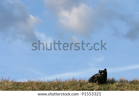 Black cat on the meadow. 	One eared black cat on the meadow is waiting for a pray - stock photo