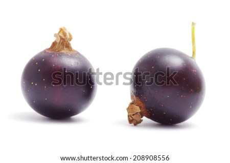 black currant fruits