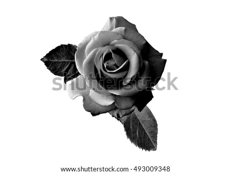 White Rose, Black Forest - Kindle edition by Eoin Dempsey. Download it once and read it on your Kindle device, PC, phones or tablets. Use features like bookmarks, note taking and highlighting while reading White Rose, Black Forest.