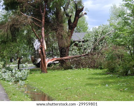 """Bleeding Tree"" damage from the Derecho May 8, 2009. - stock photo"