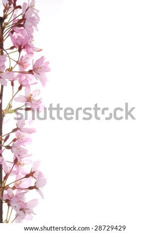Blossom_Pink spring blossom - stock photo