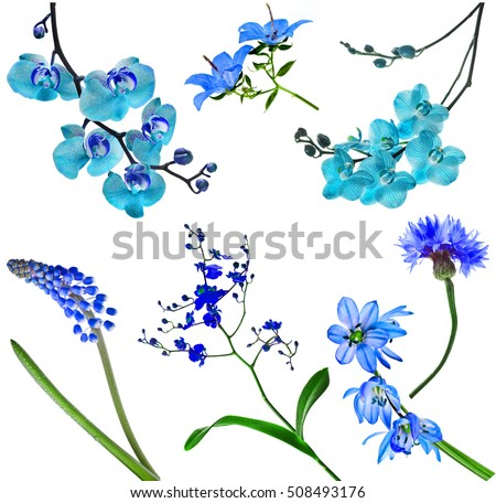 Blue colorful  beautiful flowers , Collection Set Collage from various garden, field and house flower plants , isolated on white background