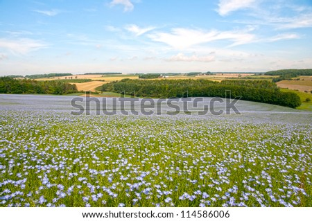 Blue flax field landscape at spring, shallow depth of field ,Cotswolds,England - stock photo