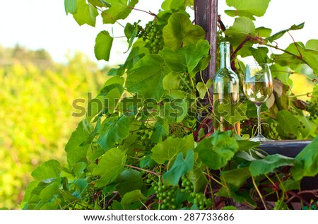 bottle and glass with sweet wine in vineyard - stock photo