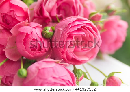 bouquet of beautiful roses. Beautiful, delicate, pink roses, a beautiful background for cards, place for text, wedding card - stock photo