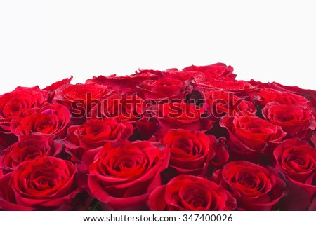 Bouquet of Red Roses - Isolated on White