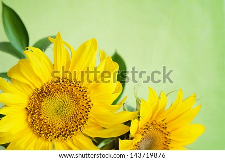 Bouquet of sunflowers on green background - stock photo