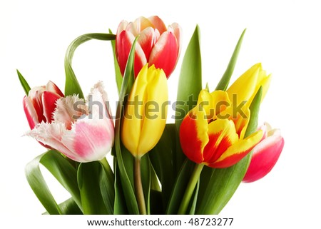 bouquet of the fresh tulips on white background - stock photo