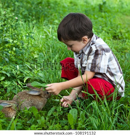 Boy fed rabbits in the garden by hand