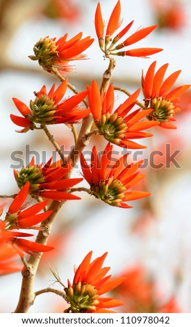 branch with leaves and Beautiful spring flowers - stock photo