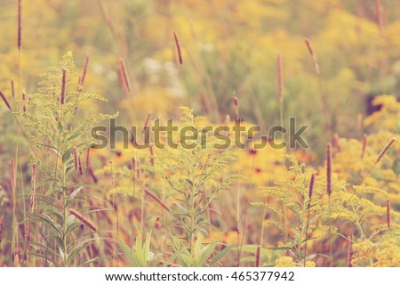 Bright and vibrant goldenrod and black eyed susan meadow
