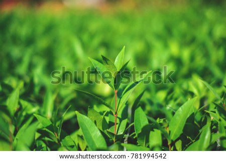 Bright green leaves on green bokeh background.